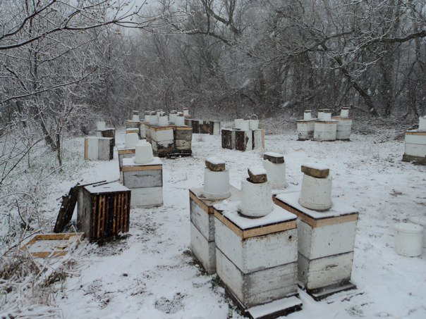 Using beekeepers' real world experience to solve beekeepers' real world problems